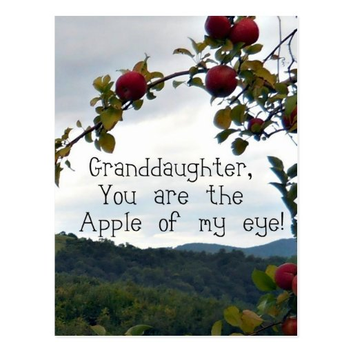 Granddaughter, You are the Apple of my eye! Postcard