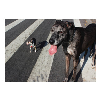 Grande y alto, foto de great dane y perros de la c