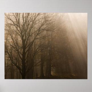 Grandes árboles de NP Tennessee de la montaña ahum Posters