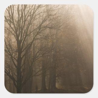 Grandes árboles de NP Tennessee de la montaña Pegatina Cuadrada