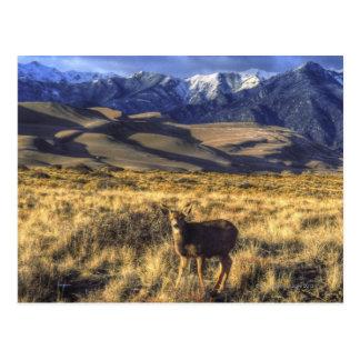 Grandes dunas de arena parque nacional, Colorado Postales