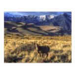 Grandes dunas de arena parque nacional, Colorado Postal