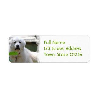 Grandes etiquetas blancas del remite del perro de etiquetas de remite