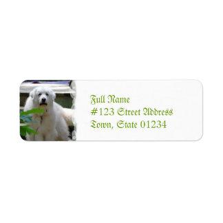 Grandes etiquetas blancas del remite del perro de etiqueta de remitente