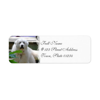 Grandes etiquetas de correo blancas del perro de etiqueta de remite