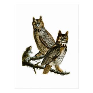 Grandes pájaros de Juan Audubon del búho de Tarjetas Postales