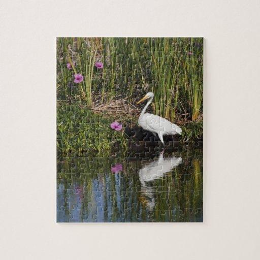 Grandes pescados de la caza del Egret en pantano d Puzzle Con Fotos