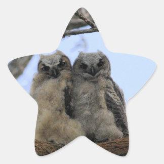 Grandes polluelos del búho de cuernos pegatinas forma de estrella personalizadas