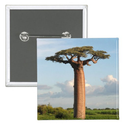 Grandidier's Baobab Madagascar Buttons