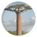Grandidier's Baobab Madagascar Dinner Plate
