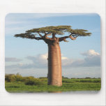 Grandidier's Baobab Madagascar Mouse Pad