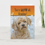 """Grandma's Birthday Card<br><div class=""""desc"""">Cute expression on poodle"""