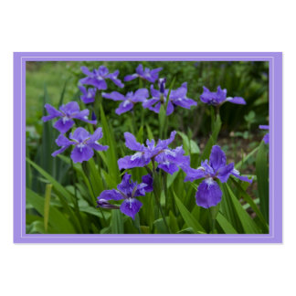 Grandma's Cali Iris Gift Tag Large Business Cards (Pack Of 100)