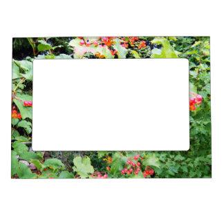 Grandpa's Cherry Bush Magnetic Picture Frame