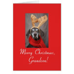 Grandson reindeer pointer merry x-mas greeting card