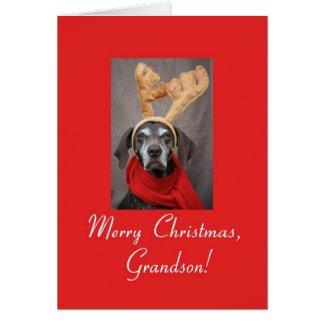 Grandson reindeer pointer merry x-mas card
