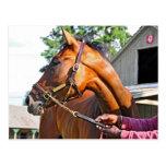 Granero #47 del asilo del caballo en Saratoga Tarjeta Postal