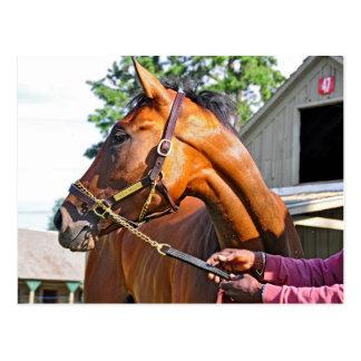 Granero #47 del asilo del caballo en Saratoga Postales