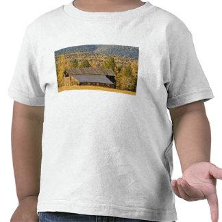 Granero de madera viejo con los tamaracks del otoñ camiseta