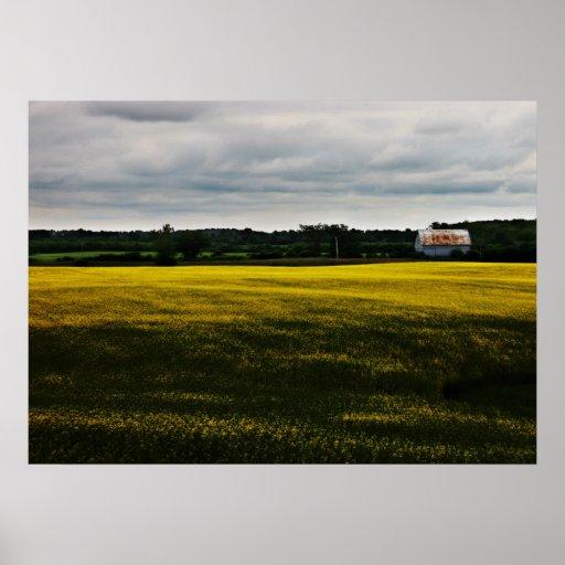 Granero en el campo de flor amarillo póster