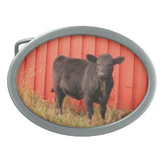 Granero negro del rojo de la vaca hebillas de cinturón ovales