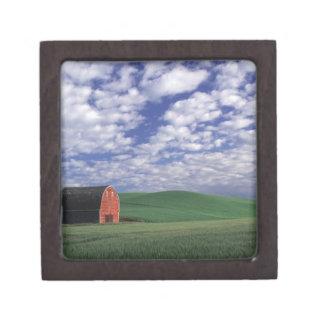 Granero rojo en campo del trigo y de la cebada en  cajas de joyas de calidad