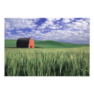 Granero rojo en campo del trigo y de la cebada en  fotografías