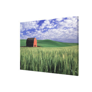 Granero rojo en campo del trigo y de la cebada en  lienzo envuelto para galerías