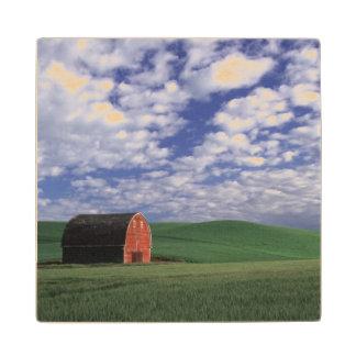 Granero rojo en campo del trigo y de la cebada en posavasos de arce