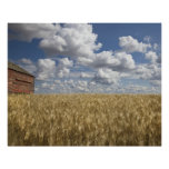 Granero viejo en el campo de trigo 2 posters