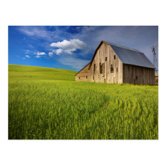 Granero viejo en el campo del trigo de primavera postal