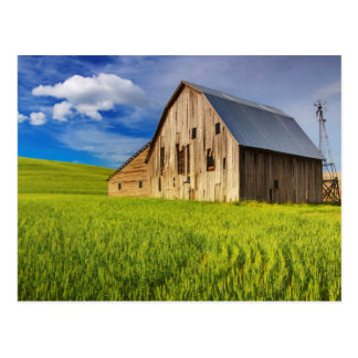 Granero viejo rodeado por el campo de trigo de tarjeta postal
