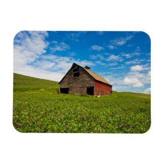 Granero viejo, rojo en el campo de garbanzos iman