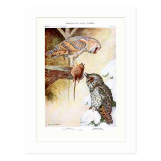 Granero y búhos Largo-espigados Postal