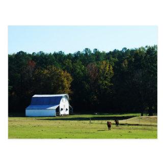 Granero y caballos blancos tarjetas postales
