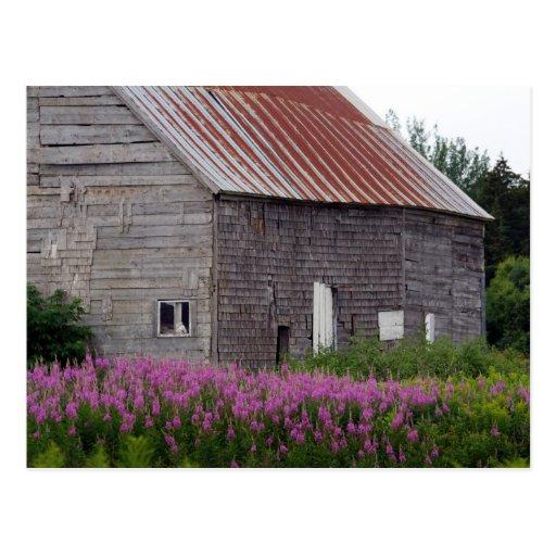 Granero y Wildflowers Postales
