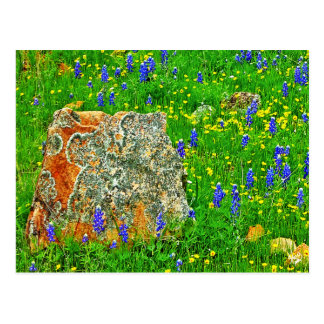 Granite and Wildflowers on Willow City Loop Post Card