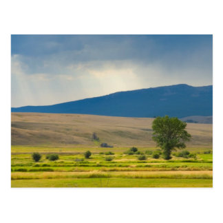 Granite County Montana Postcard