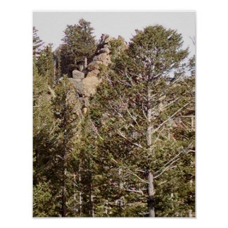 Granite rock face, rises from the forest floor poster