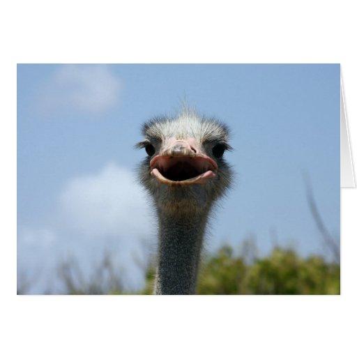 Granja Aruba de la avestruz Tarjeta De Felicitación