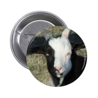Granja de la cabra de Shelton Pin Redondo De 2 Pulgadas