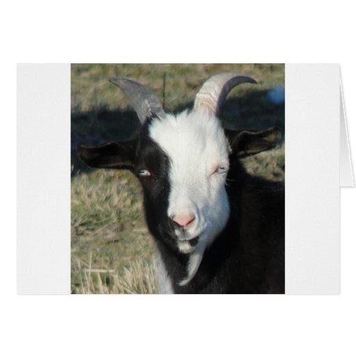 Granja de la cabra de Shelton Tarjeta De Felicitación