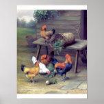 Granja de los nabos del gallo poster