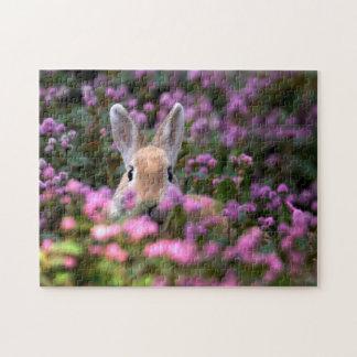 Granja del conejo rompecabezas con fotos