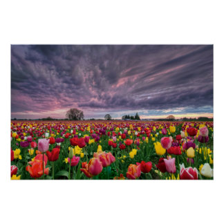 Granja del tulipán en poster de la estación de pri