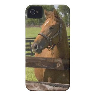 Granja excelente del caballo en el condado de carcasa para iPhone 4