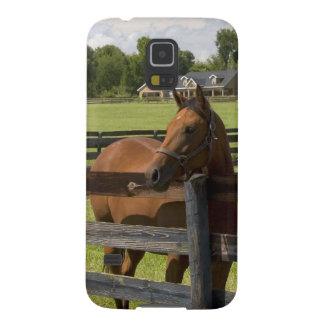 Granja excelente del caballo en el condado de Mari Funda De Galaxy S5
