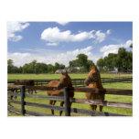 Granja excelente del caballo en el condado de Mari Tarjeta Postal