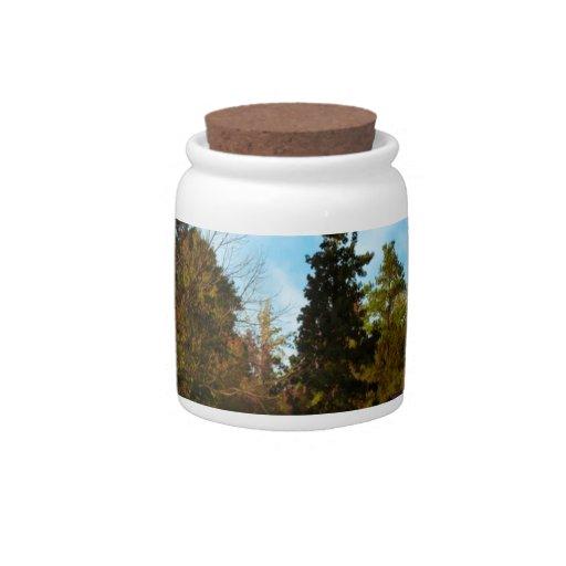 Granja penosa de la arboleda del árbol platos para caramelos