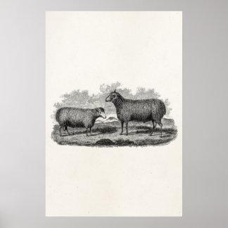 Granja retra del ejemplo de la oveja de las ovejas poster